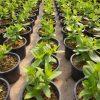 دبلوم في العلوم الزراعية (إدارة المزارع)