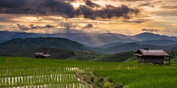 ماجستير في التكنولوجيا الحيوية للمحاصيل