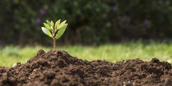بكالوريوس (مرتبة الشرف) في البيئة والاستدامة